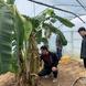 안성시농업기술센터